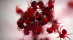 Red spider frenzy close up, colorized abstract time lapse.mov  Red spider frenzy close up, coloriz