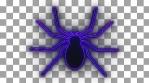 NEON SPIDER_1