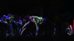 Neon Nature Experience