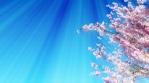 Sakura Tree Background