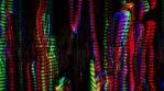 Bass Laser-015
