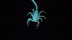 Scorpion 010