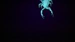Scorpion 018