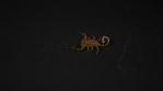 Scorpion 022