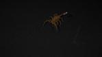 Scorpion 023