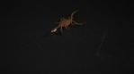 Scorpion 025
