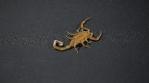 Scorpion 028