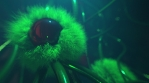 Asimov Alien Halloween VJ Loop