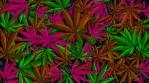 Cannabis Vector Multicolor Background