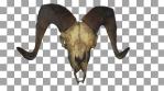 Horned Skull Transition 03