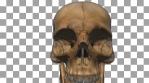 Skull Transition 02