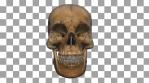 Skull Transition 03