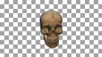 Skull Transition 04