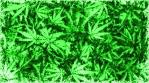 Marijuana Grunge 001011