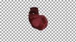 Pulsating Heart Red Alpha 01