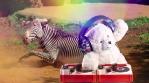 DJ Teddy Bear spinning with zebra and rainbow lights