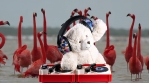 DJ Teddy Bear playing turntables with flamingos