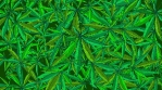 Cannabis Vector BG