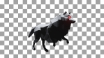 Halloween Wolf Running and Rotating