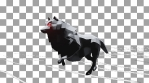 Halloween Wolf Running