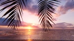 Red sunset over the endless ocean. Red sky, yellow sun, palm trees, beautiful sea and seascape.