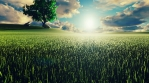 Mystical and fascinating video of morning green grass, tree on the background, morning sun and cloud