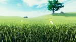 Beautiful video of morning green grass, tree in the background, flowers, morning sun and clouds