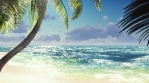 Branches of palm trees and tropical plants in the wind at sunny day.