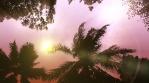 Storm Palms Under Clear Dawn Sky