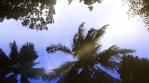 Storm Palms Under Clear 3 Sunset Sky