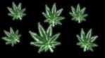 Weed12