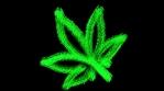 Weed7