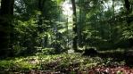 Slider shot in forest