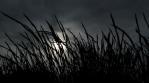 Black grass silhouette
