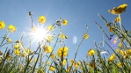 Sunny summer flowers