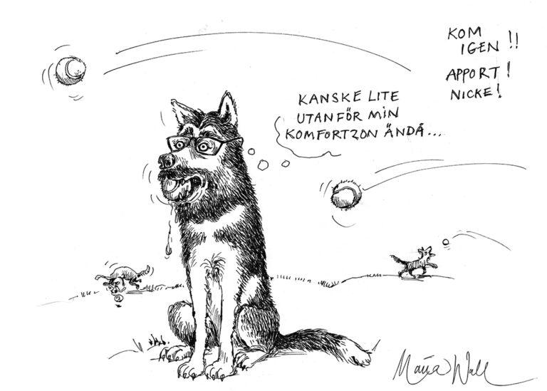 Sakta men säkert, från katt- till hundmänniska!