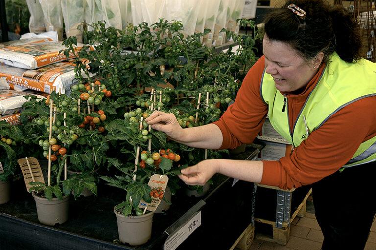 Fixa vårkänslan med gröna växter