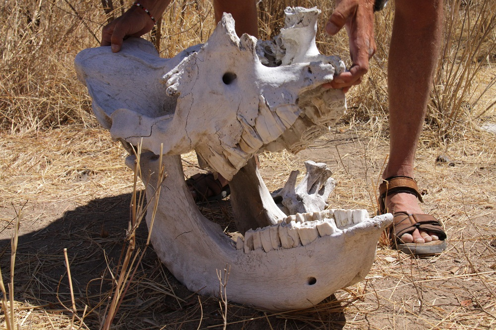 Rhino VF blogg2