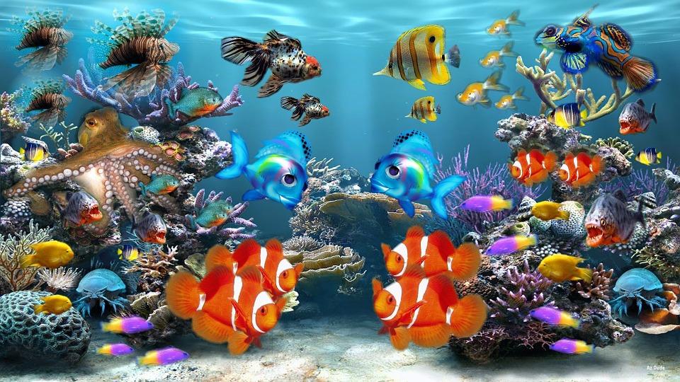 aquarium-284551_960_720