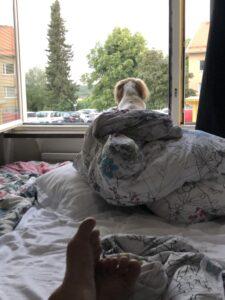 Min hund Mandy Shit Tzu