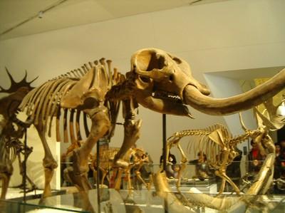 Mastodontmuseum till mellanostern 3