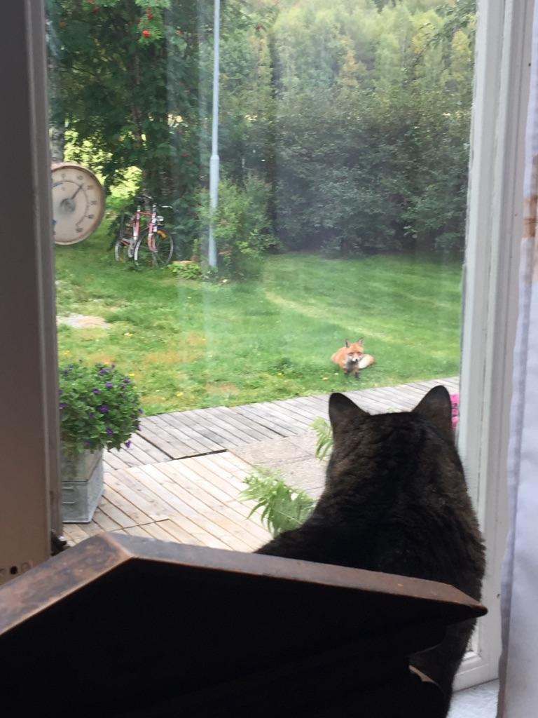 Ebba skulle så gärna gå ut och skrämma räven
