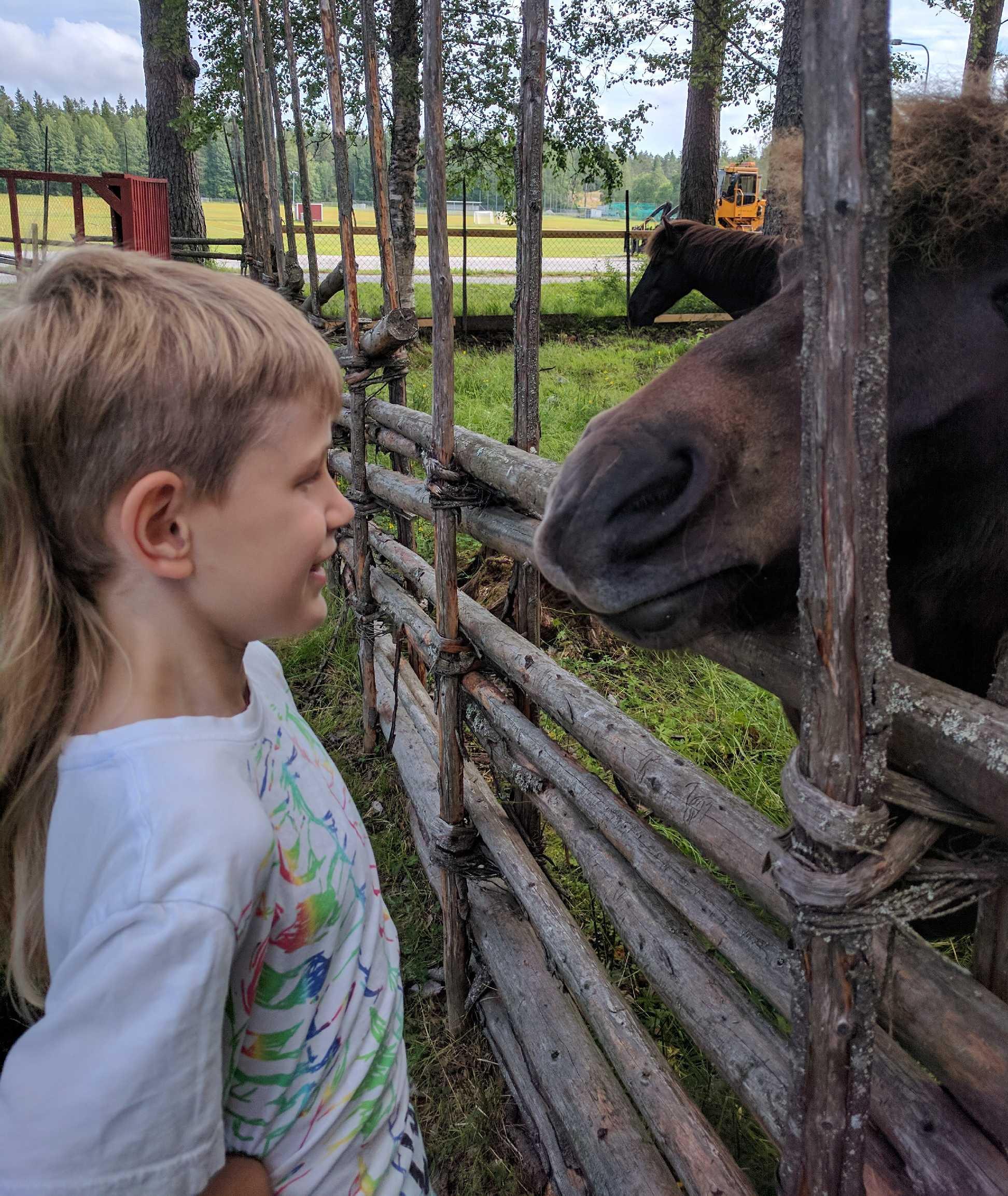 Hästen ville pussas, men se
