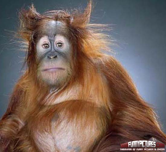 A-Really-Bad-Hair-Day-Funny-Monkeys