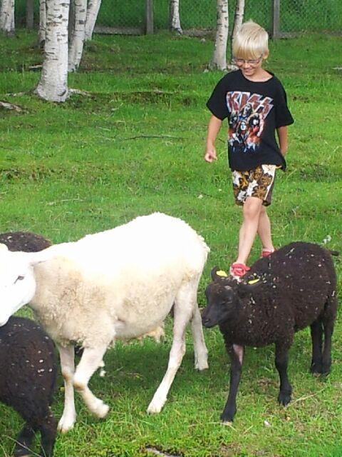 Gackon jobba som fåraherde idag:-) BP