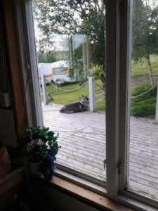 Hund-2271-vkwp-694x390