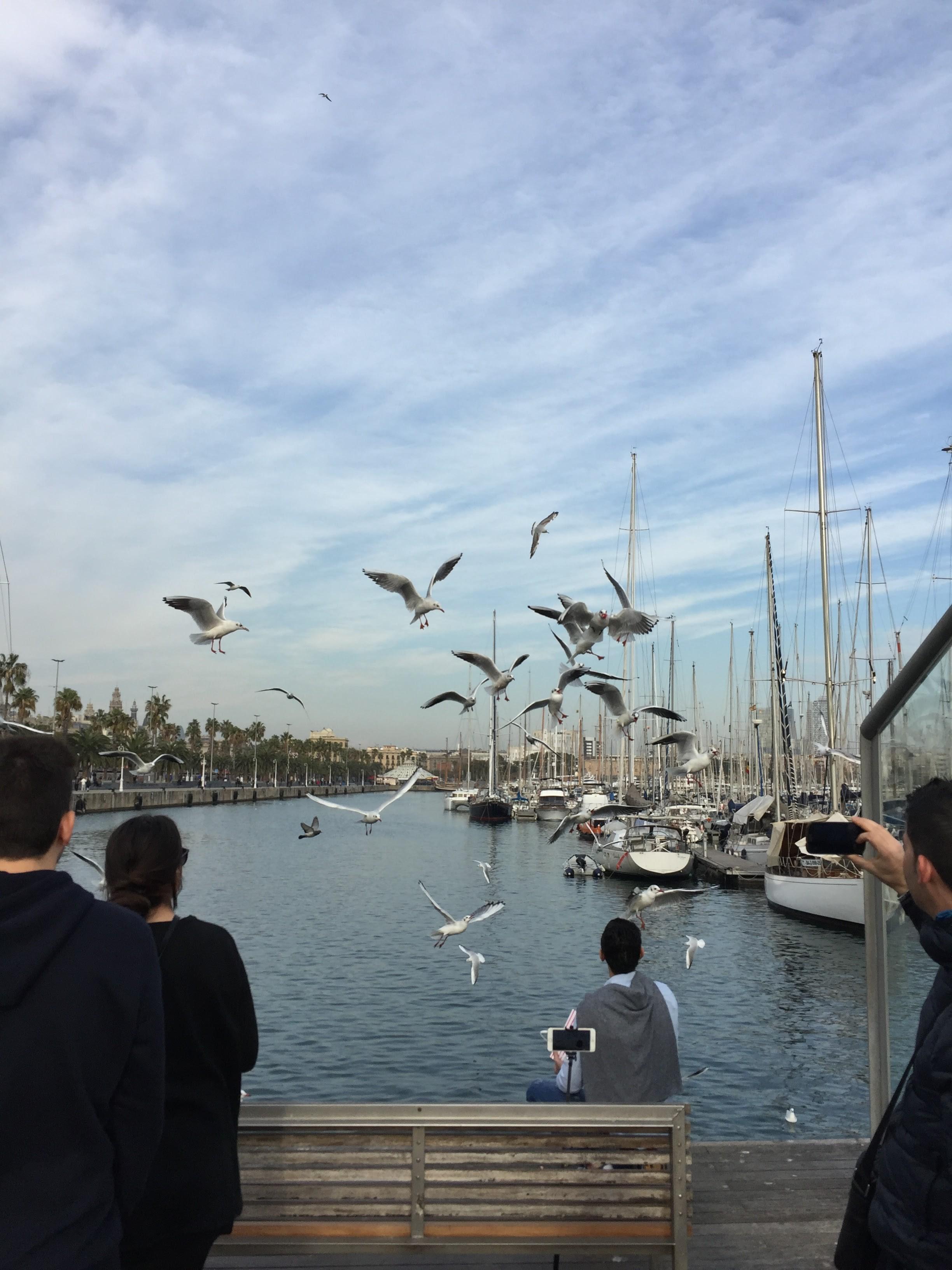 flock_måsar