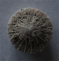 Korall01