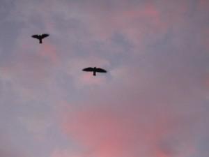 """""""fly little bird fly"""""""