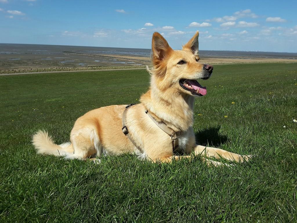 dog-2276071_1920